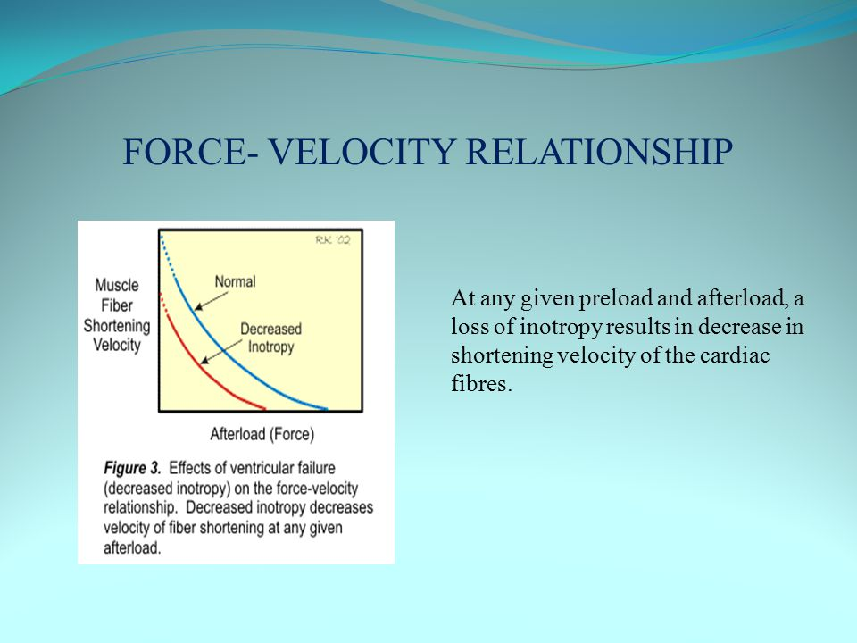 FORCE- VELOCITY RELATIONSHIP