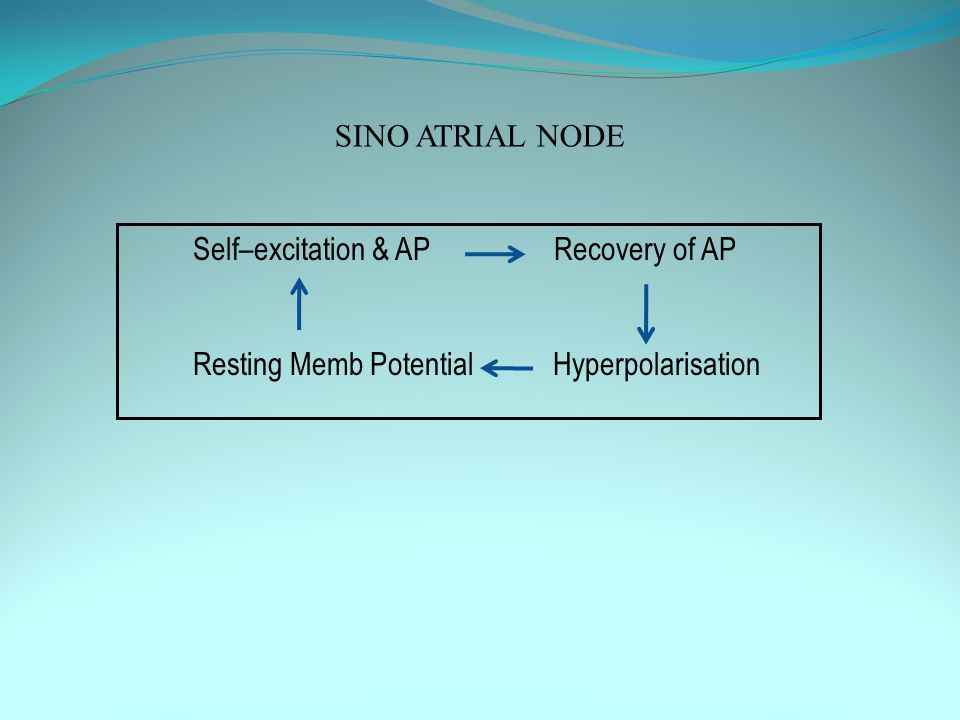 SINO ATRIAL NODE Self–excitation & AP Recovery of AP.
