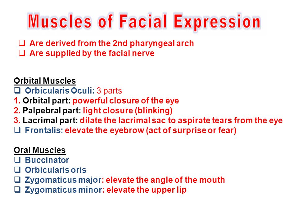 Are derived from the 2nd pharyngeal arch