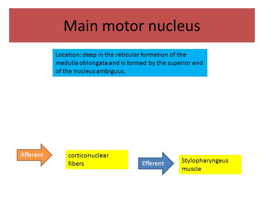 Main motor nucleus Location: deep in the reticular formation of the medulla oblongata and is formed by the superior end of the nucleus ambiguus.