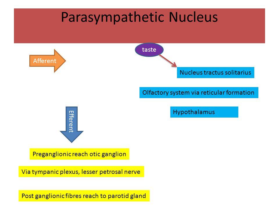 Parasympathetic Nucleus