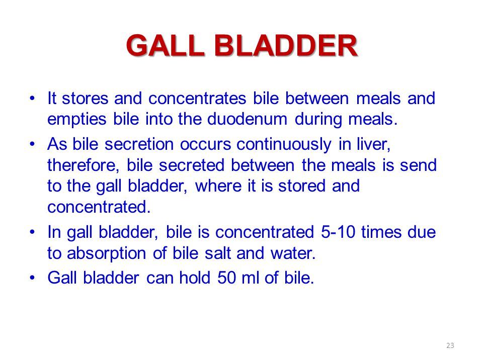GALL BLADDER It stores and concentrates bile between meals and empties bile into the duodenum during meals.