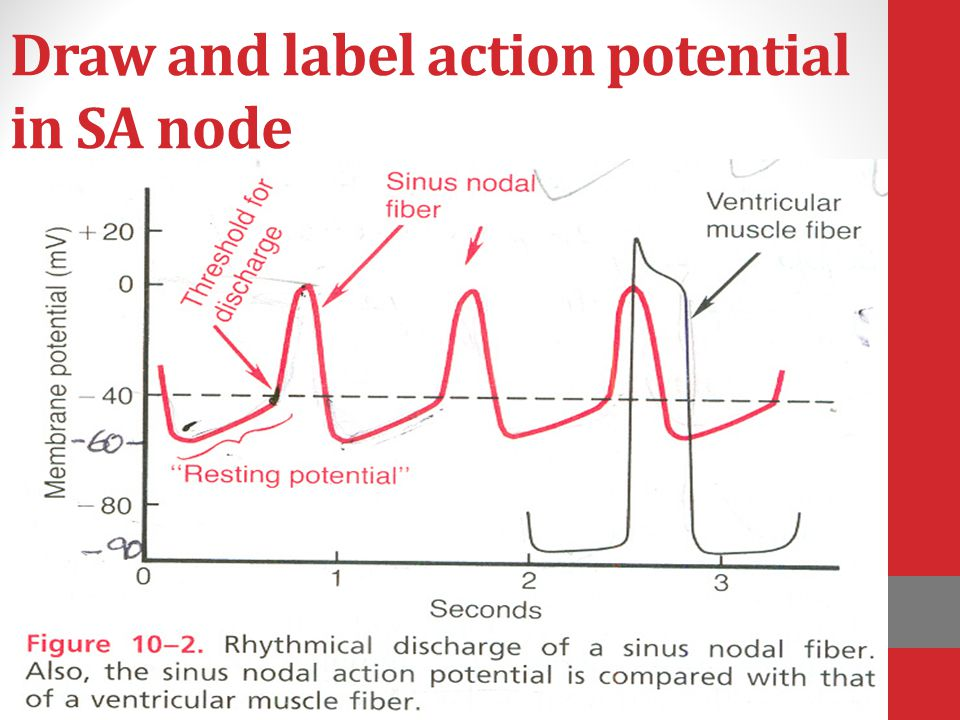 Draw and label action potential in SA node