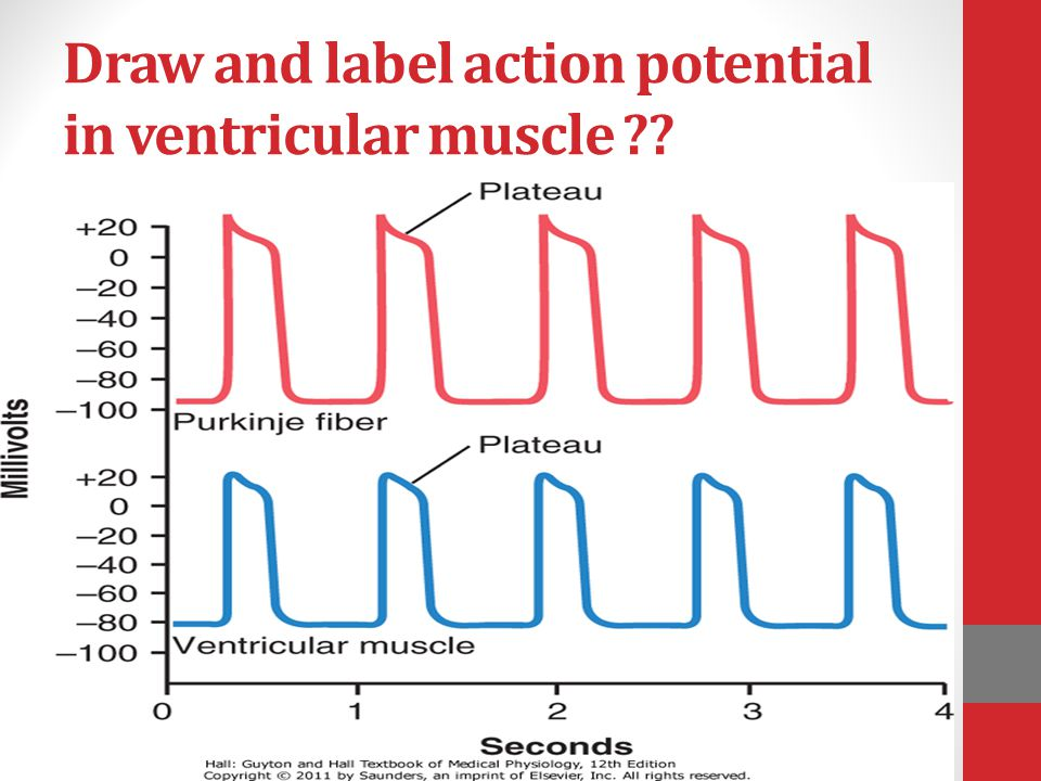 Draw and label action potential in ventricular muscle