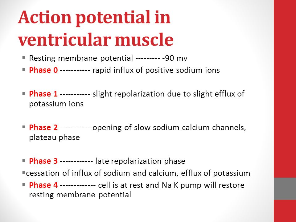 Action potential in ventricular muscle