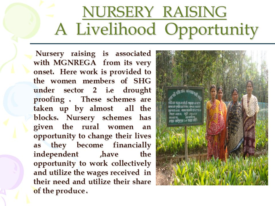 NURSERY RAISING A Livelihood Opportunity