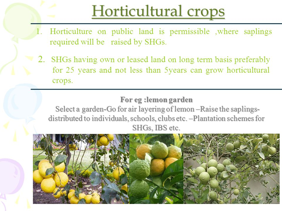 Horticultural crops Horticulture on public land is permissible ,where saplings required will be raised by SHGs.