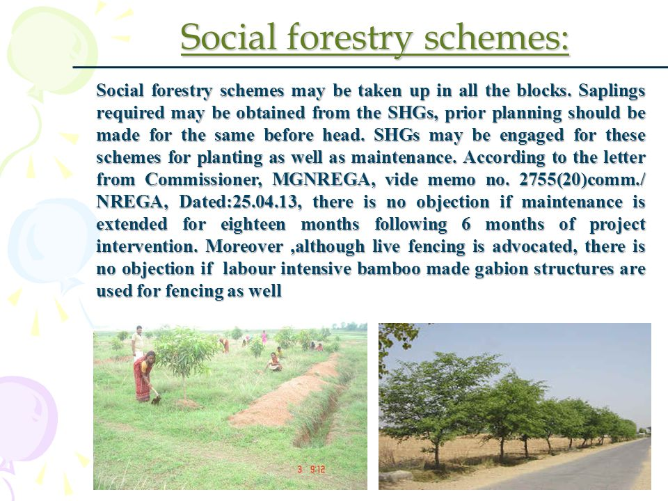 Social forestry schemes: