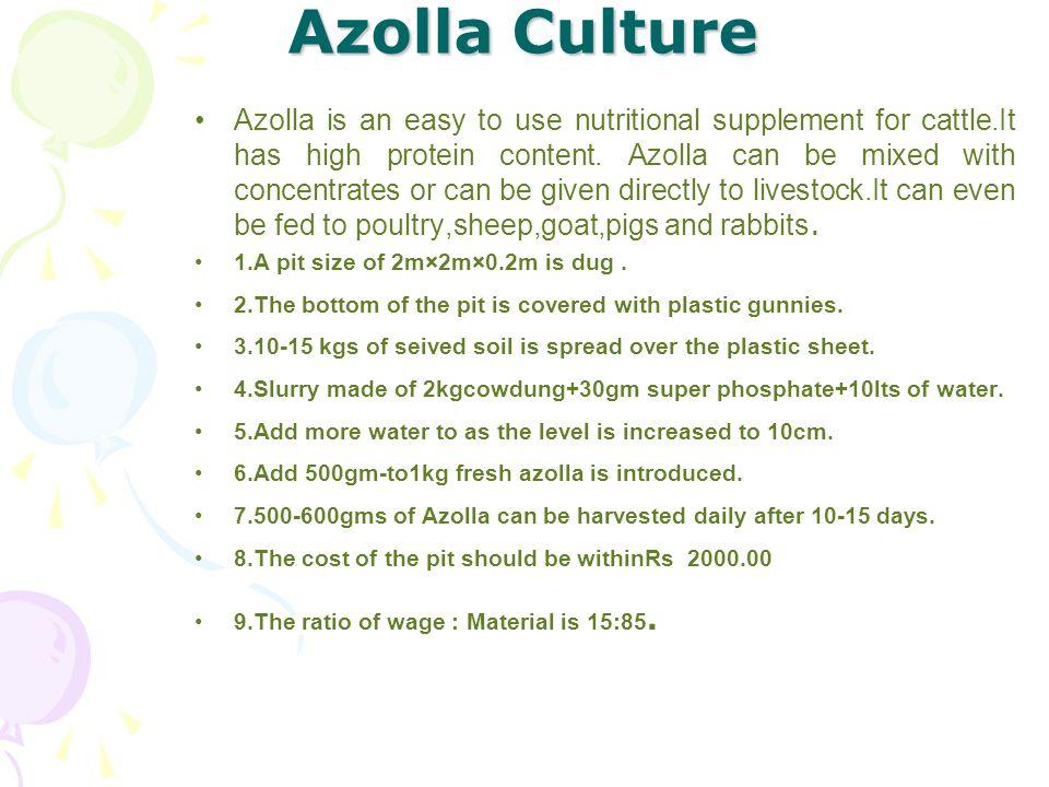 Azolla Culture