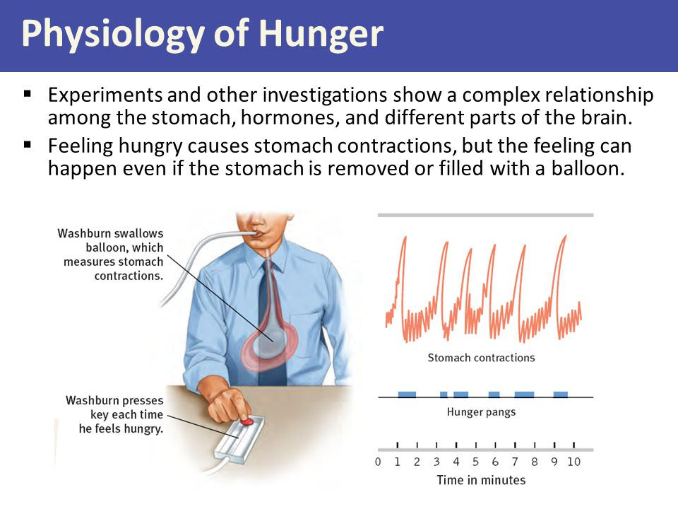 Physiology of Hunger Experiments and other investigations show a complex relationship among the stomach, hormones, and different parts of the brain.