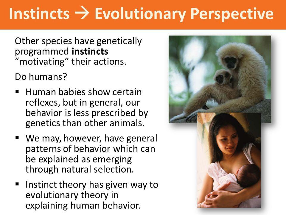 Instincts  Evolutionary Perspective