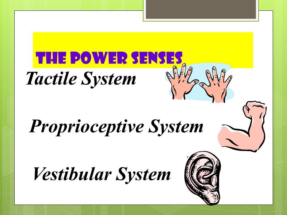 Proprioceptive System
