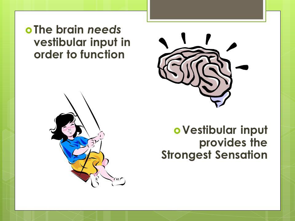 The brain needs vestibular input in order to function