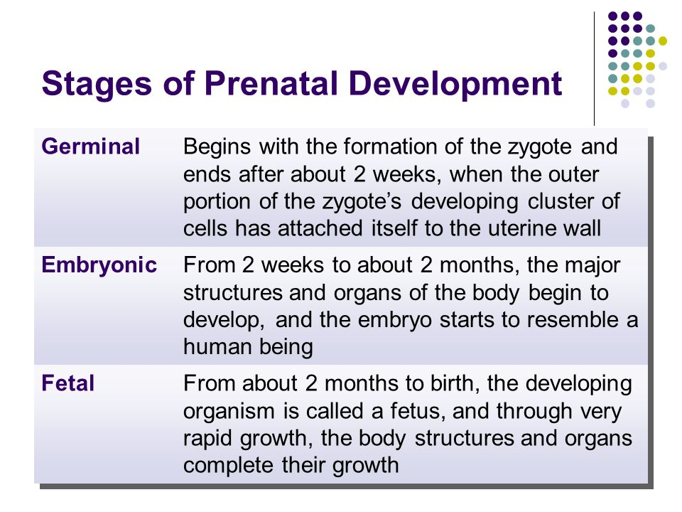 prenatal development and birth Development happens quickly during the prenatal period, which is the time between conception and birth this period is generally divided into three stages: the.