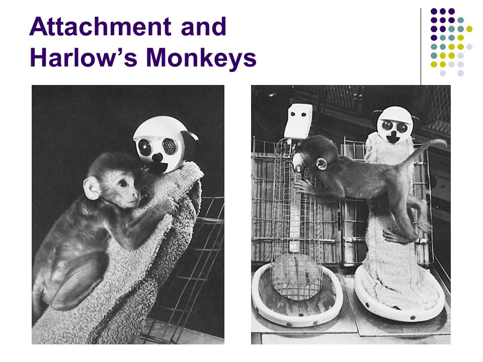Attachment and Harlow's Monkeys