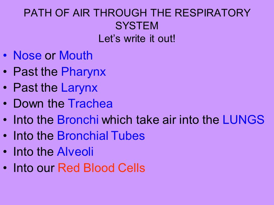 PATH OF AIR THROUGH THE RESPIRATORY SYSTEM Let's write it out!