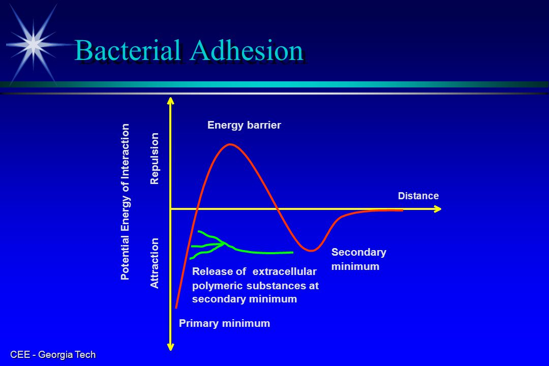 Bacterial Adhesion Energy barrier Repulsion
