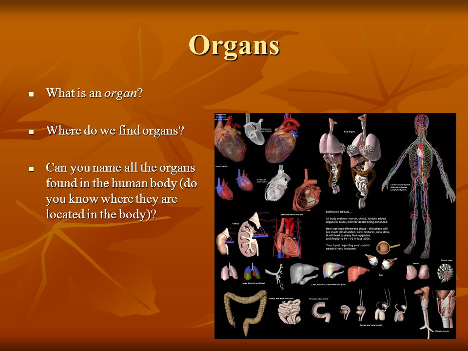 Organs What is an organ Where do we find organs