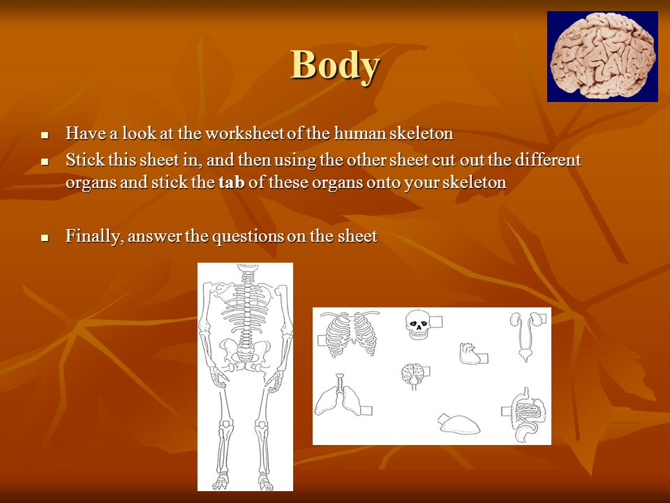 Body Have a look at the worksheet of the human skeleton