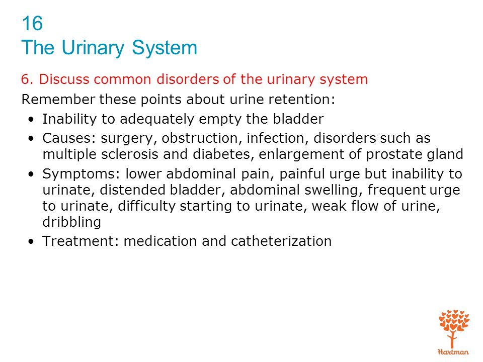 6. Discuss common disorders of the urinary system