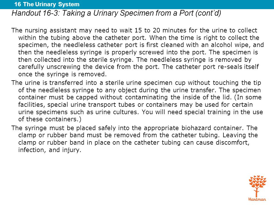Handout 16-3: Taking a Urinary Specimen from a Port (cont'd)