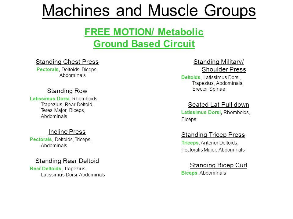 Machines and Muscle Groups