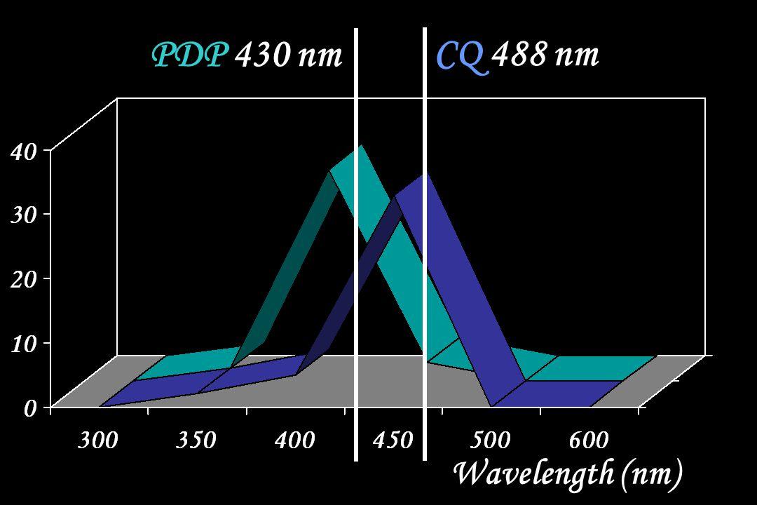 PDP 430 nm CQ 488 nm Wavelength (nm)