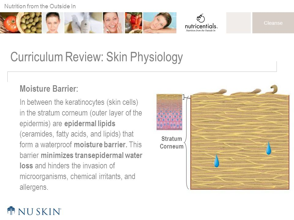 Curriculum Review: Skin Physiology
