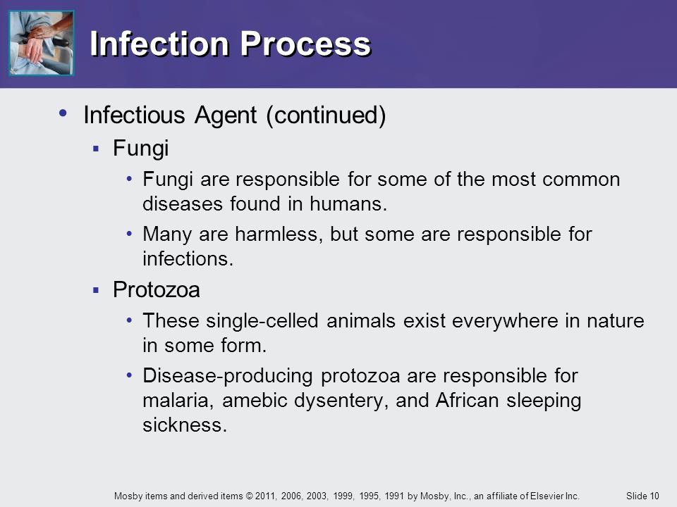Infection Process Infectious Agent (continued) Fungi Protozoa