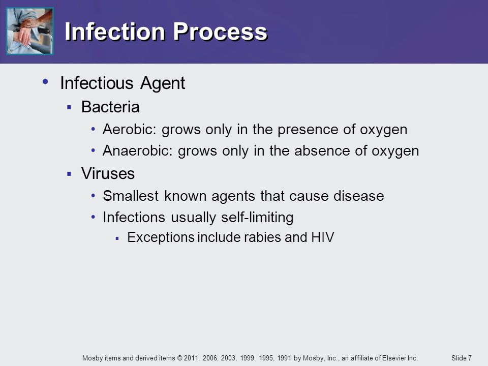 Infection Process Infectious Agent Bacteria Viruses