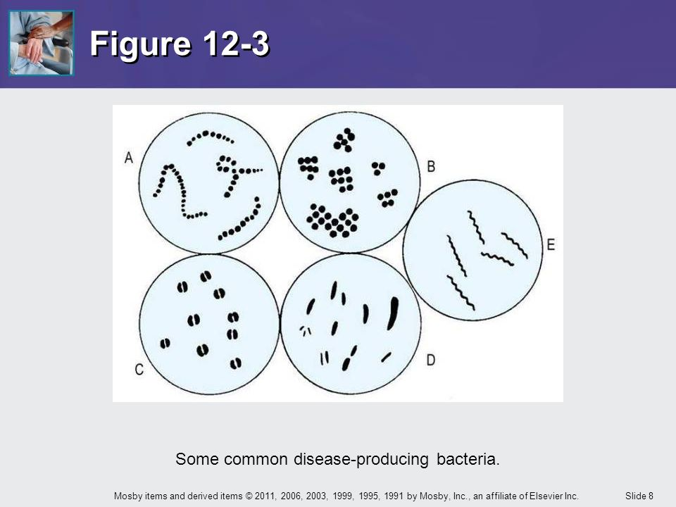 Some common disease-producing bacteria.