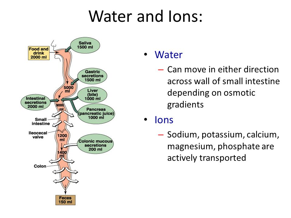 Water and Ions: Water Ions