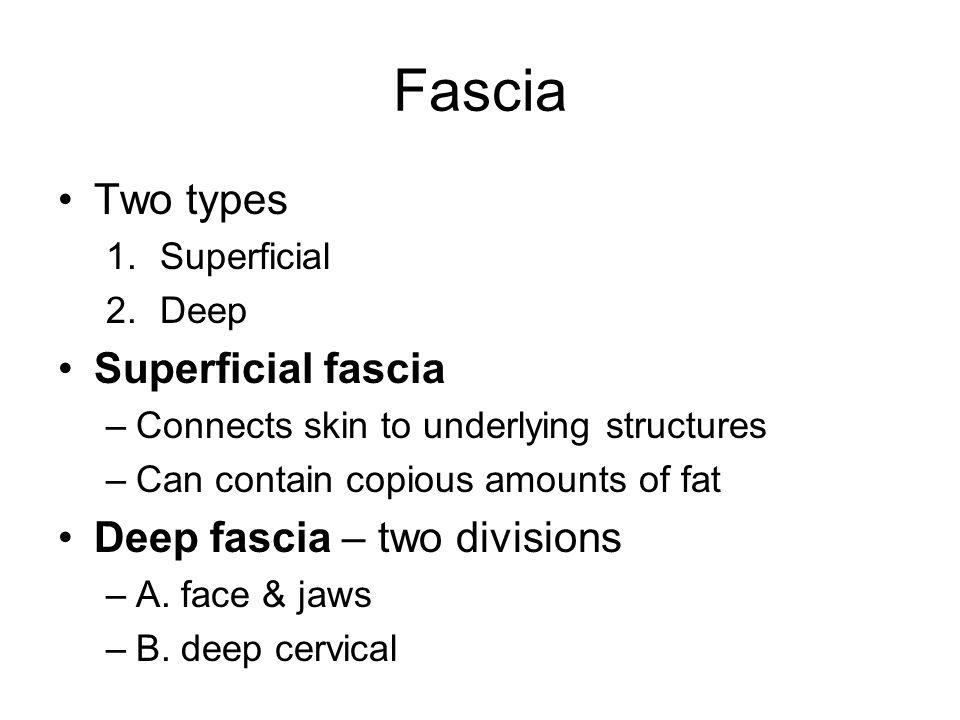 Fascia Two types Superficial fascia Deep fascia – two divisions