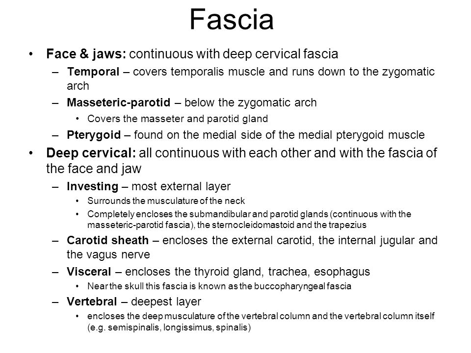 Fascia Face & jaws: continuous with deep cervical fascia