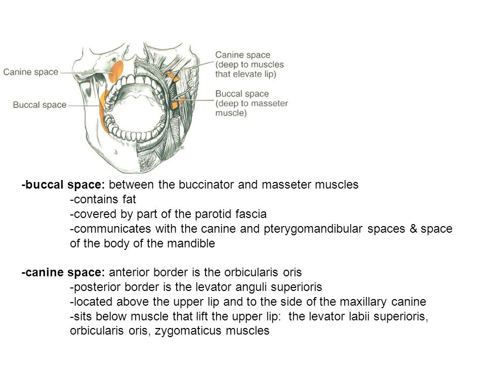 -buccal space: between the buccinator and masseter muscles