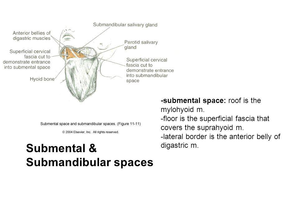 Submental & Submandibular spaces
