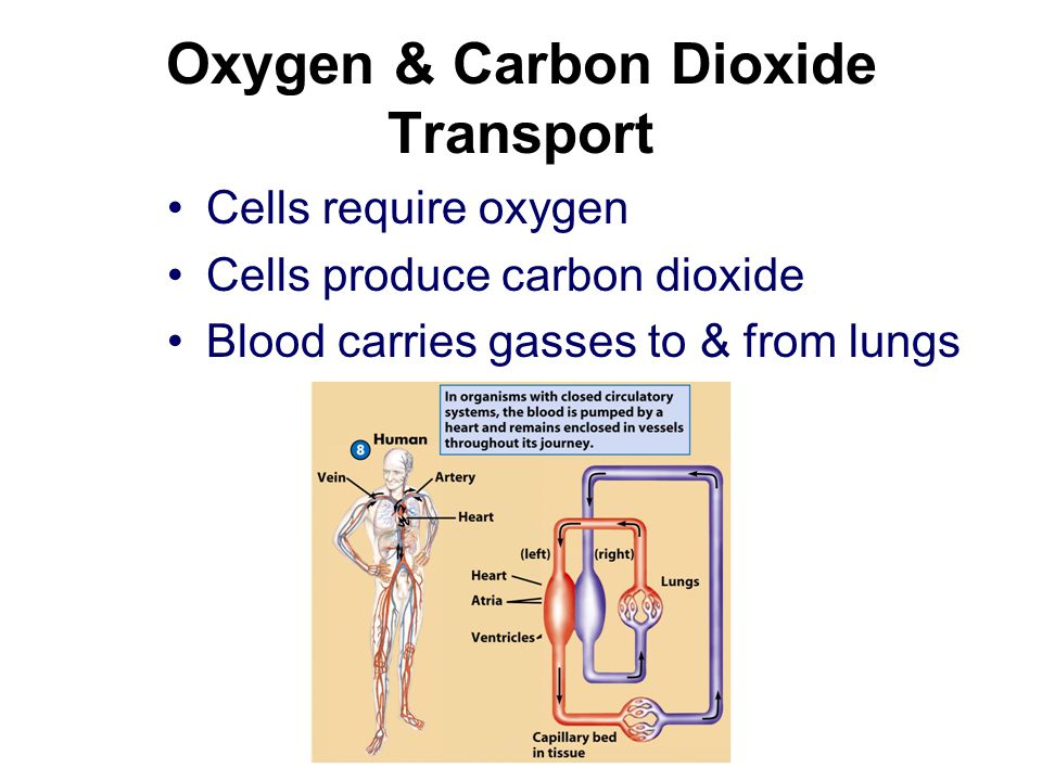 Oxygen & Carbon Dioxide Transport
