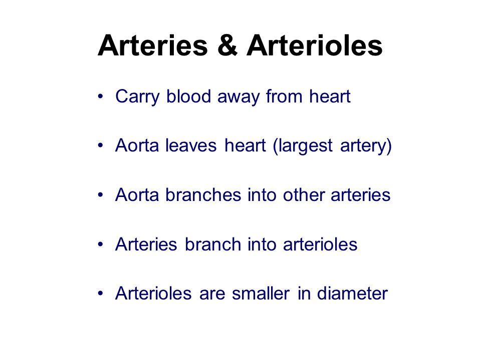 Arteries & Arterioles Carry blood away from heart