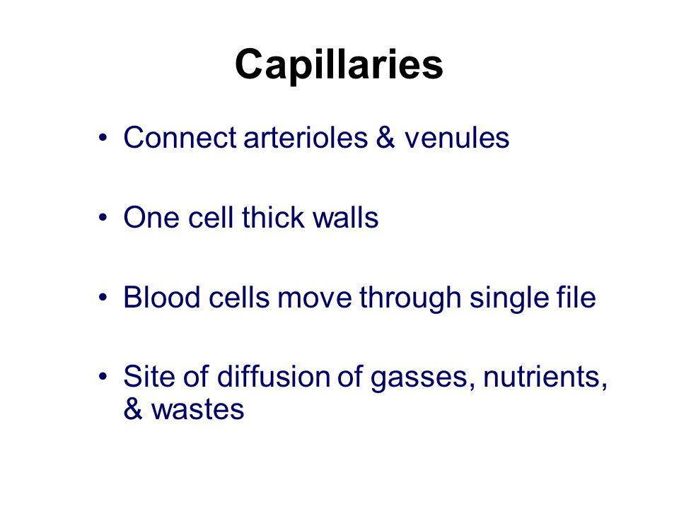 Capillaries Connect arterioles & venules One cell thick walls