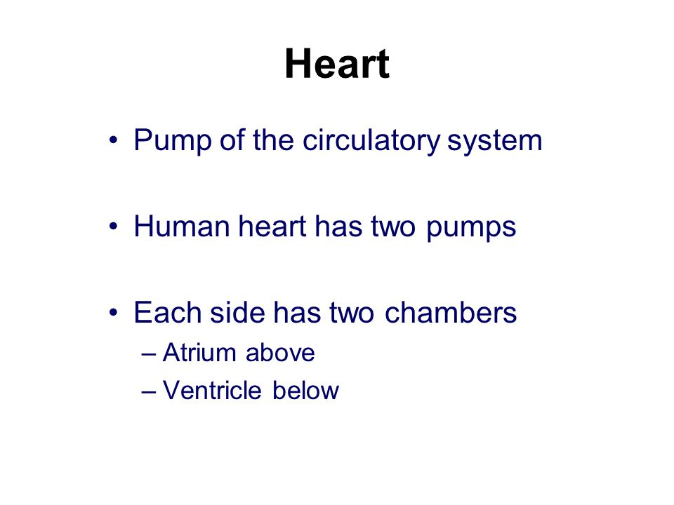 Heart Pump of the circulatory system Human heart has two pumps