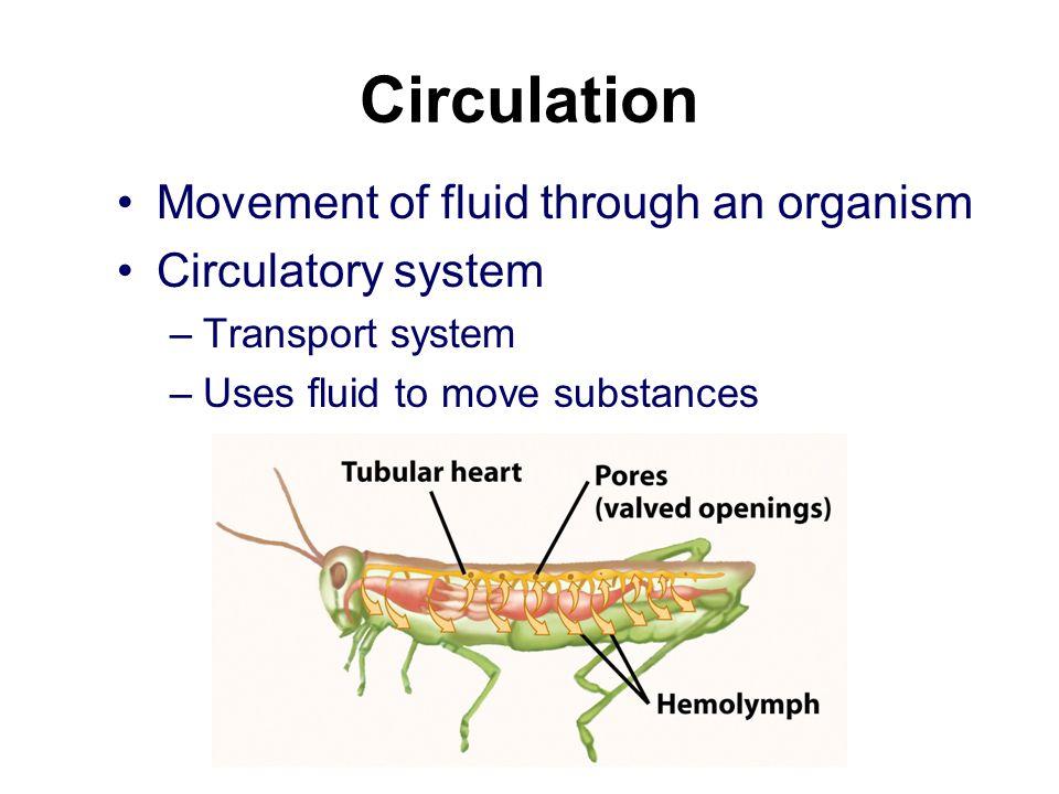 Circulation Movement of fluid through an organism Circulatory system