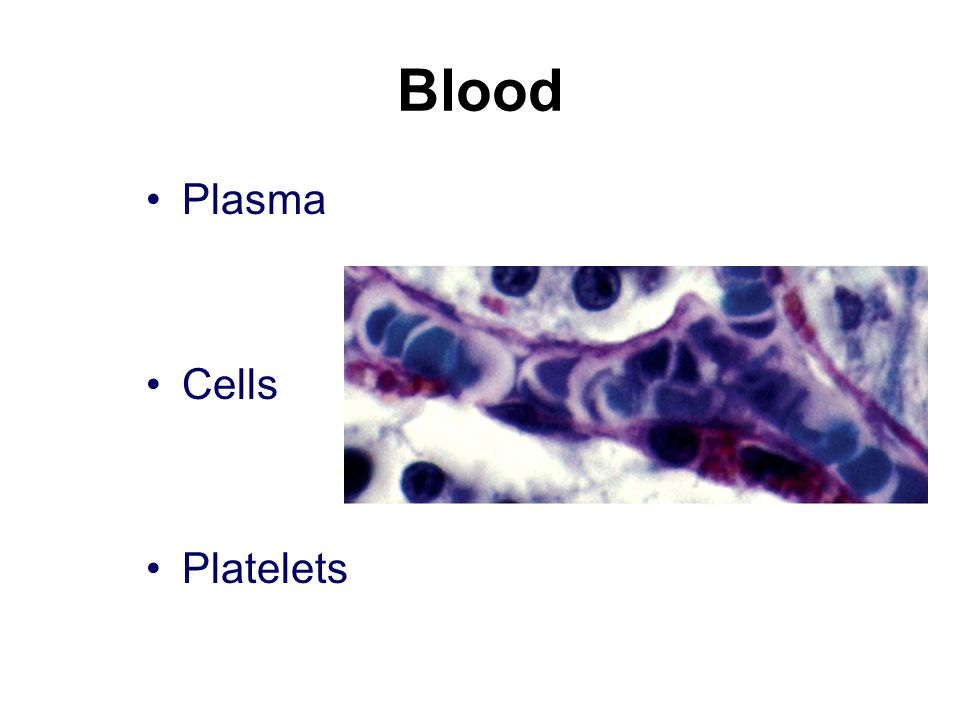 Blood Plasma Cells Platelets