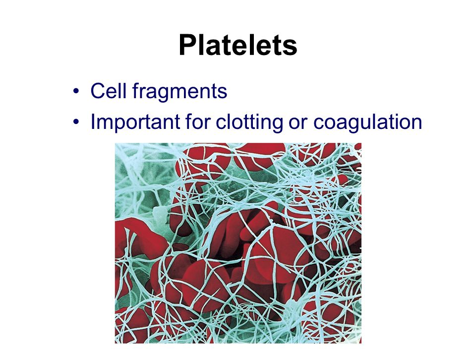 Platelets Cell fragments Important for clotting or coagulation