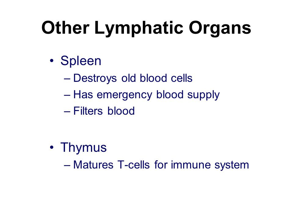 Other Lymphatic Organs