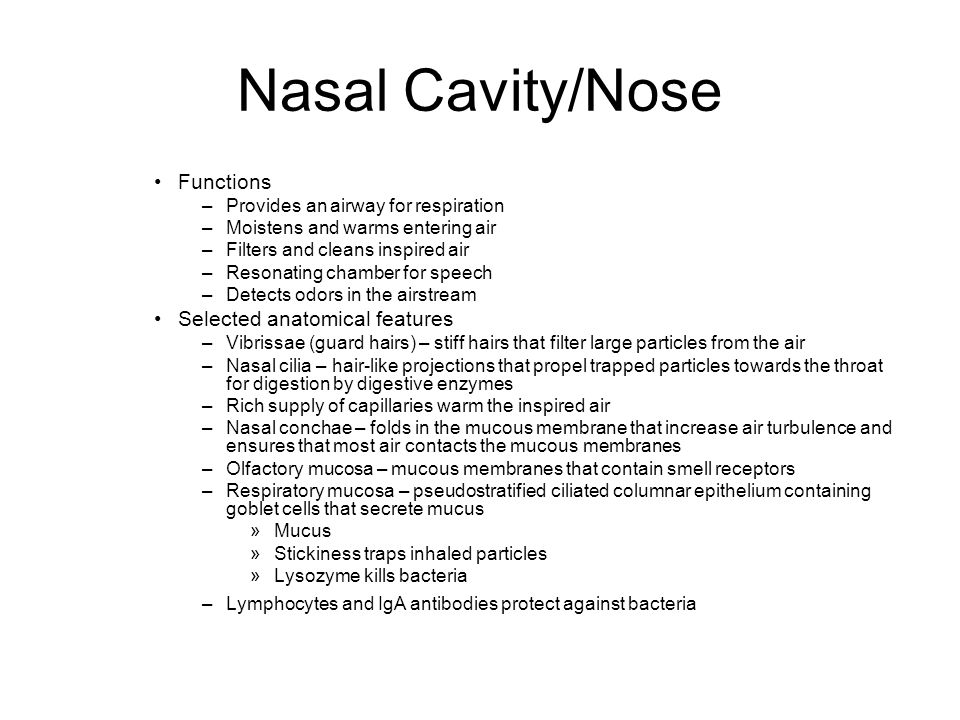 Nasal Cavity/Nose Functions Selected anatomical features