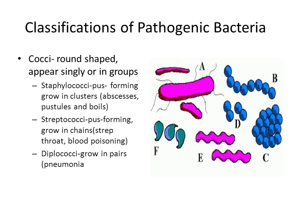 Classifications of Pathogenic Bacteria