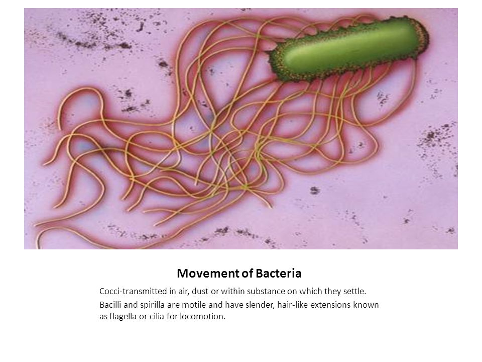 Movement of Bacteria Cocci-transmitted in air, dust or within substance on which they settle.