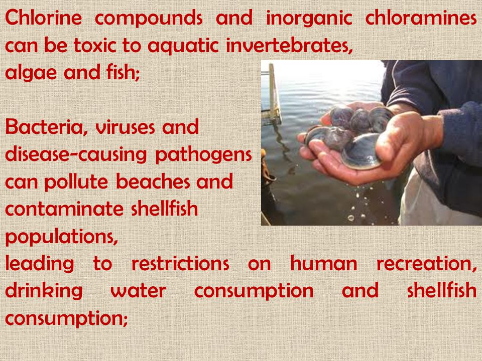 Chlorine compounds and inorganic chloramines can be toxic to aquatic invertebrates,