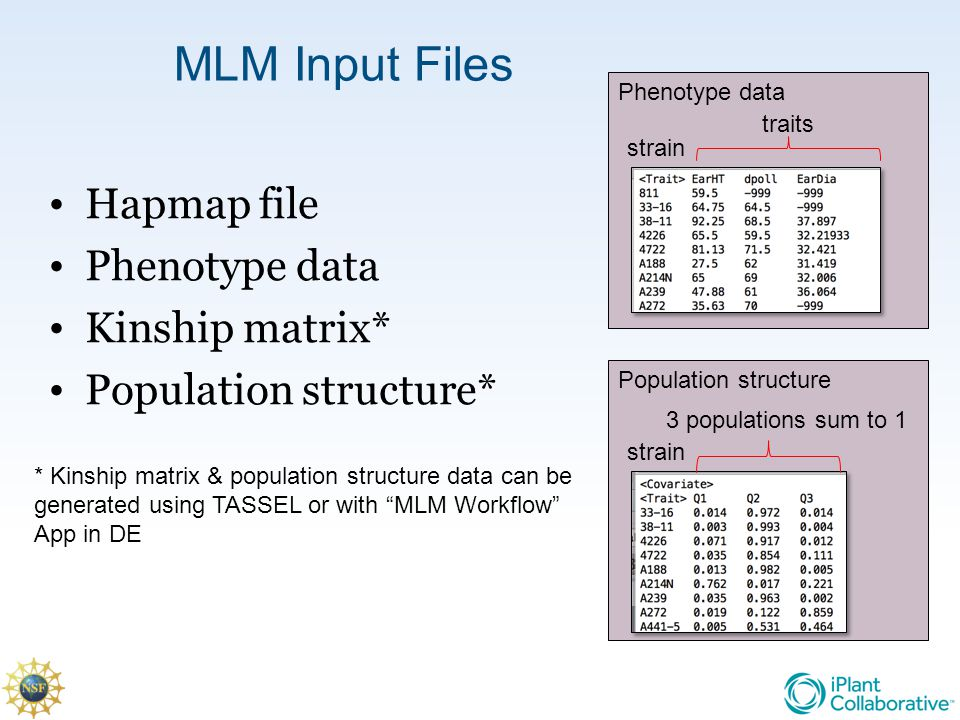 MLM Input Files Hapmap file Phenotype data Kinship matrix*