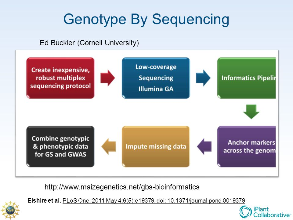 Genotype By Sequencing